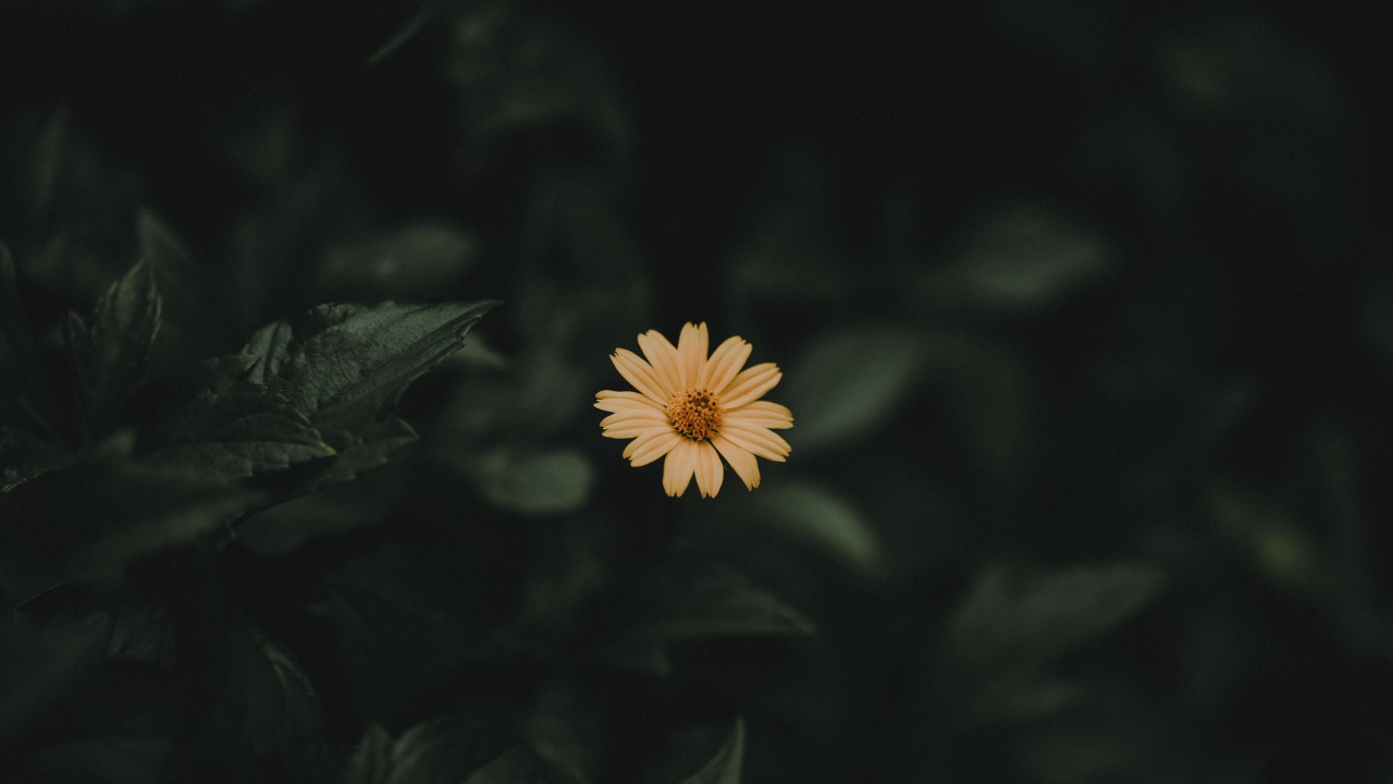 A picture of a yellow flower in bloom.