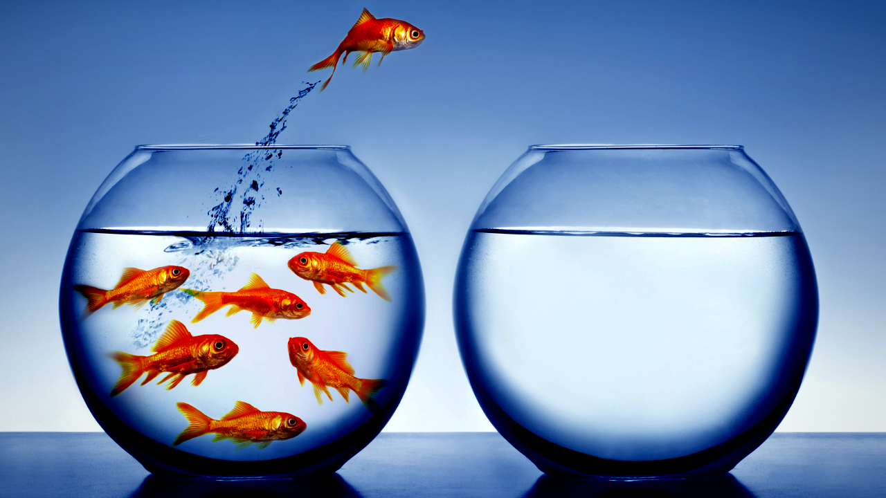 A gold fish desires more room by jumping from a fish-filled bowl into a en empty fish bowl.